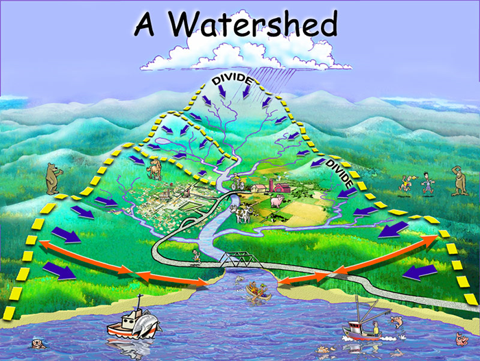 Watershed Cartoon